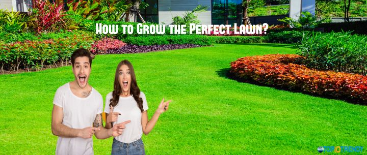 How to Grow the Perfect Lawn